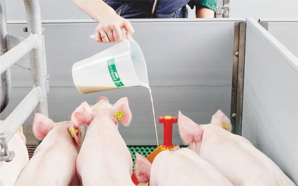 Porcolac Quick mleko dla prosiąt
